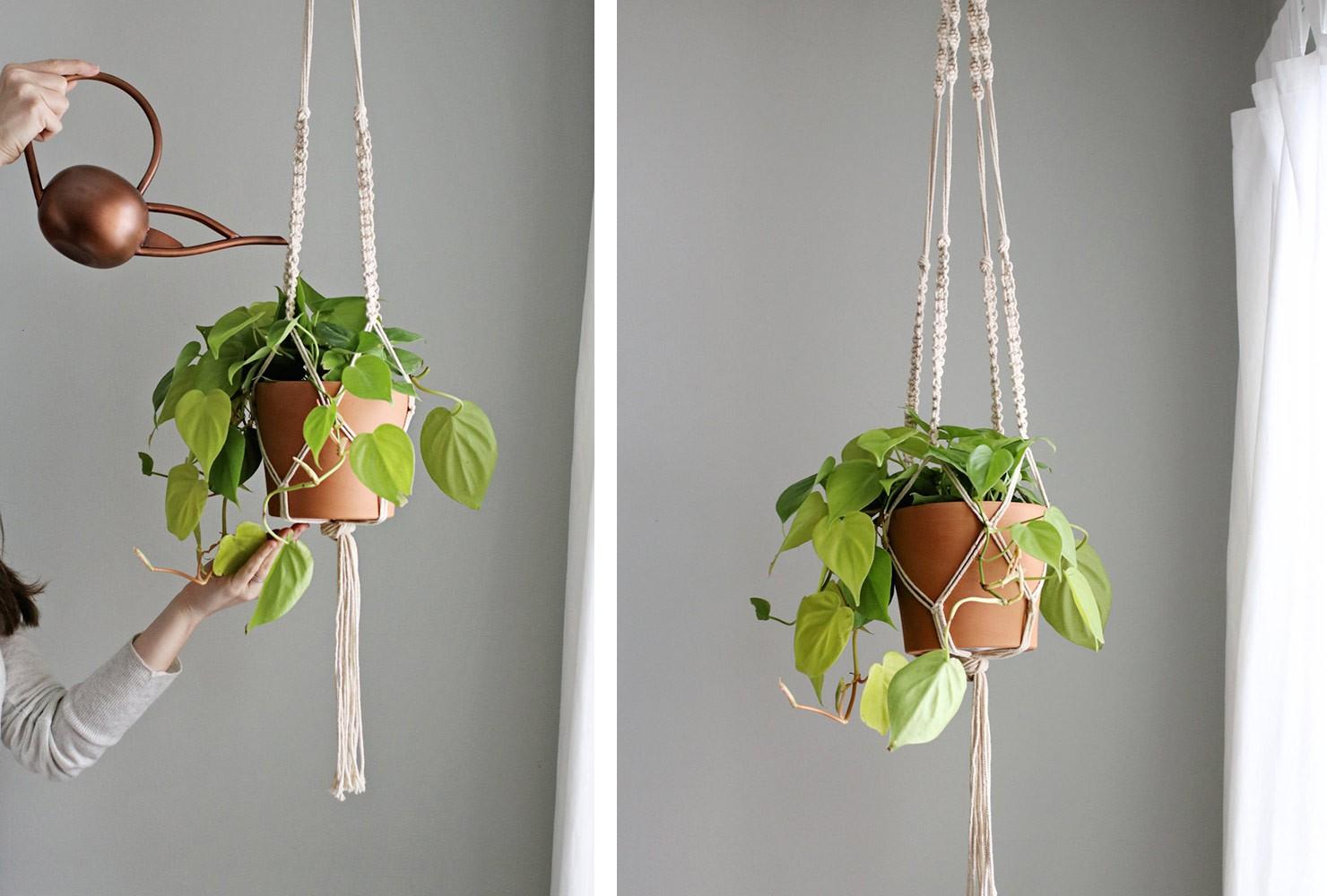 Décorer petit salon plantes suspendues